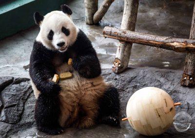 Pandapallot