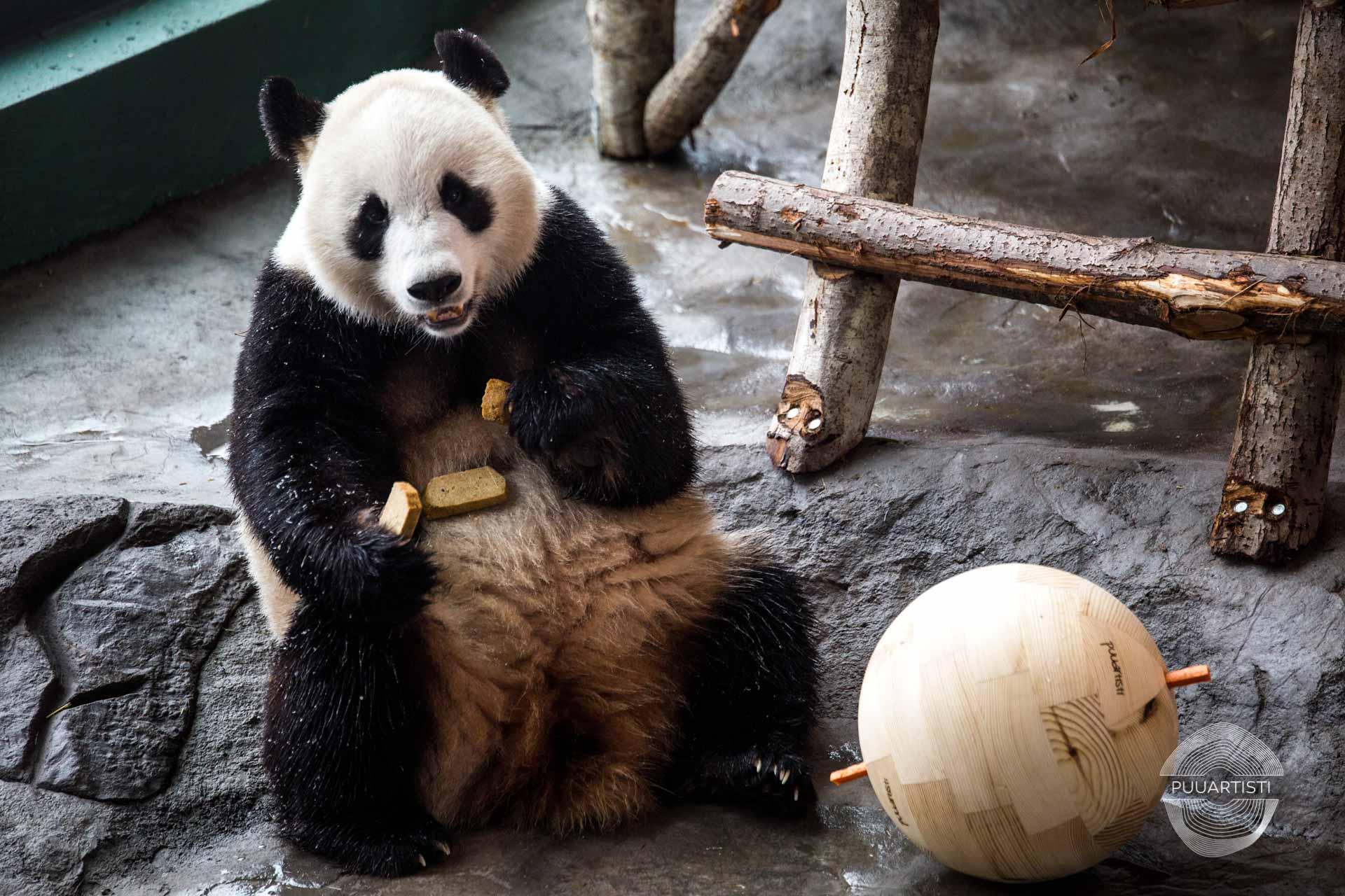 Puuartisti Panda balls Woodartist Photographer Julia Reijonen