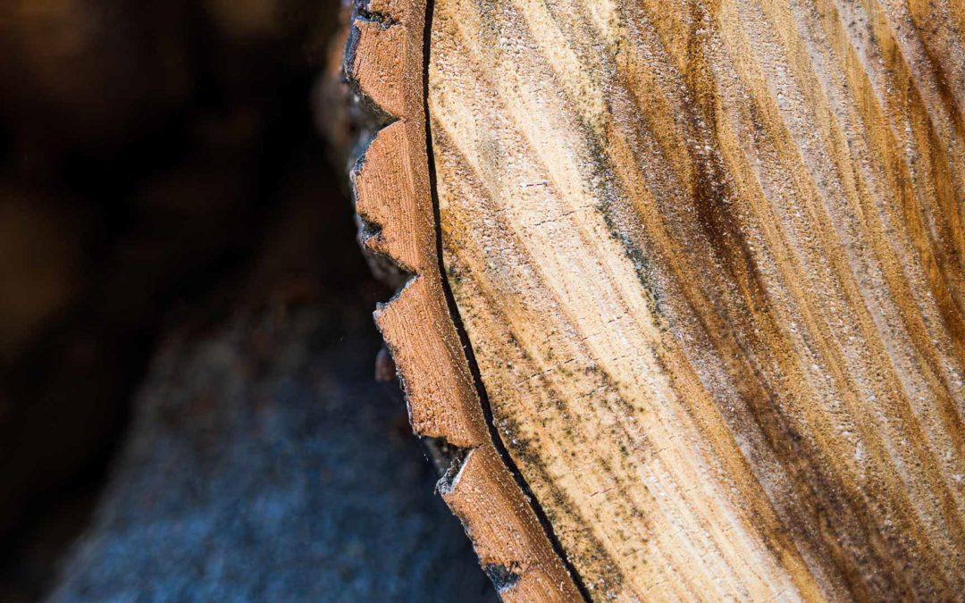 Joensuun Vapaudenpuiston puita sahataan ja tehdään penkeiksi Puuartistin verstaalla